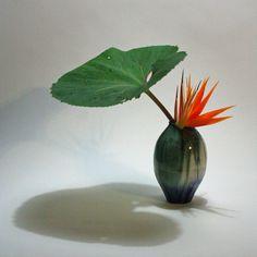 Japanese butterbur and bird of paradise blooms