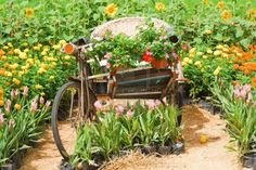 Three wheel bicycle Vintage, and decorated with flowers