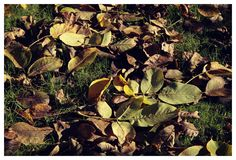 Photo by me. Photo: Diána Rigó - Budapest, in the fall of 2015 #Budapest #Hungary #photography #fall #autumn #Autumn_leaf