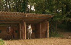 Le pâturage - Des chevaux dans un abri de pré