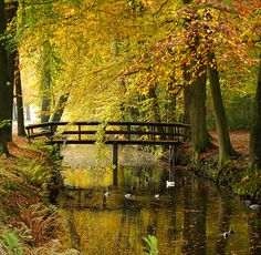 allthingseurope:  Silence is golden by atsjebosma  Leek, Groningen, the Netherlands