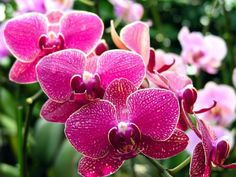 Solid Advice For The Flower Garden Enthusiast - My Easy Garden Ideas Beautiful Flowers Pictures, Flower Pictures, Pretty Flowers, Mini Orquideas, Blooming Orchid, Flower Drawing Images, Orchid Plants, Orchid Flowers, Purple Orchids