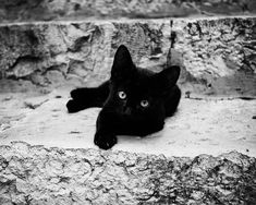 black cat photography - kitten, black and white photograph, nursery decor, baby animal, cute black kitten - Croatian Kitten II on Etsy, $25.00