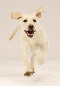 Getting ready for your new puppy or dog