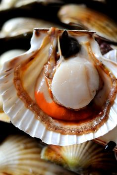Scallop recipe collection including seared scallop and scallop with pea purée