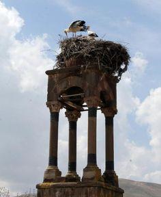 """""""İsmet KÖZELO/KAYSERİ, (DHA)- KAYSERİ'nin Özvatan ilçesinde, Agios Nikolaos (Aya Nikola) Rum Kilisesi'nin ayakta kalan çan kulesi, 59 yıldır leyleklerin yuvası oldu."""" Animaux"""