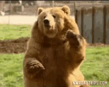 The perfect Good Day Bear Animated GIF for your conversation. Discover and Share the best GIFs on Tenor. Good Morning Kisses, Cute Good Morning, Good Morning Picture, Good Morning Greetings, Good Morning Images, Morning Gif, Morning Quotes, Kiss Pictures, Today Pictures