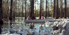 The Boat scene was at Cypress Gardens located in Moncks Corner, SC. oh Cypress gardens a fav of mine. The Notebook Scenes, The Notebook 2004, Affordable Family Vacations, Cypress Gardens, Film Movie, Movies, Movie Scene, Day Of My Life, Where To Go