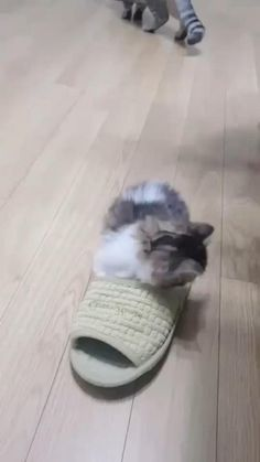 Cute Baby Cats, Cute Cat Gif, Cute Little Animals, Cute Cats And Kittens, Cute Funny Animals, Kittens Cutest, Cute Babies, Funny Animal Memes, Funny Animal Pictures