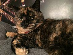 Daisy  Cat | Pawshake Toronto