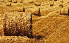 biomass research at CSIC institute (Spain)