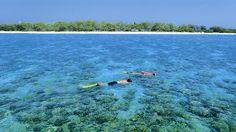 Lady Elliot Island Queensland #Australia