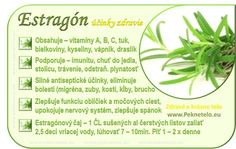 Dieta Detox, Nordic Interior, Wellness, Natural Health, Life Is Good, Medicine, Food And Drink, Health Fitness, Herbs