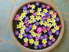 Blütenessenzen selber zuzubereiten, geht ganz einfach. Leider müsst ihr warten , das die Sonne wieder kräftig scheint. Blütenessenzen sind die Urkraft der Pflanze, auch Urtinktur genannt. Ihr benötigt dazu eine kleine Schale voller Wasser, Blüten der Pflanze, die ihr euch ausgesucht habt, Weinbrand und dunkle Fläschen. Eure gesammelten Blüten legt ihr vorsichtig auf die Oberfläche […]