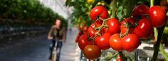 Die Zahl der Patentanmeldungen im Bereich von Nutztieren und -pflanzen steigt. Das ruft Kritiker auf den Plan. Sie befürchten verheerende Folgen durch den Eingriff in die natürliche Entwicklung.