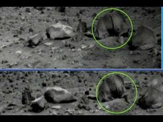 Astronomer discovers apparant animal life form on Mars from NASA images