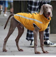 Pet 1, Pet Paws, Dog Vest, Dog Jacket, Gifts For Dog Owners, Dog Gifts, Dog Fleece, Polar Fleece, Dog Winter Coat