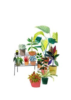 Indoor Plant Collection - Elizabeth Barnett