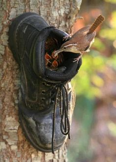What Can We Do with Old Shoes? Please do not throw away old shoes. You can recycle the old shoes to Decorate Gardens And Outdoor Rooms. Ha Vagas, Old Boots, Cowboy Boots, Yard Art, Beautiful Birds, Pretty Birds, Beautiful Family, Beautiful Images, Amazing Gardens
