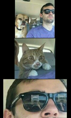 Funny Cat Memes 813814595147467432 - Just hang tight guys I know what I'm doing Source by matthieugrondin Really Funny Memes, Crazy Funny Memes, Funny Video Memes, Funny Animal Memes, Stupid Memes, Cute Funny Animals, Funny Relatable Memes, Haha Funny, Cat Memes