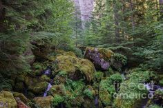The Green Scene by Carrie Cole of Fine Art America at http://fineartamerica.com/featured/the-green-scene-carrie-cole.html