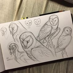 Jonathankuo by owl sketch, doodle sketch, doodle drawings, cute d Pencil Sketch Drawing, Pencil Art, Pencil Drawings, Drawing Base, Drawing Ideas, Drawing For Kids, Drawing Tips, Cute Owl Drawing, Drawing Drawing