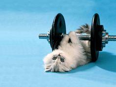 cat exercise funny 2013 new hd images. Kittens Cutest Baby, Funny Kittens, Cats And Kittens, Cute Cats, Adorable Kittens, Kitten Wallpaper, Animal Wallpaper, Wallpaper Desktop, Wallpaper Pictures