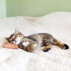Perheen kissan hämmentävimmät temput #Tendeablog