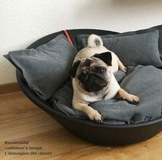 Mila Hundebett aus Leder, Mila dog bed out of leather, Letto per cane Mila in pelle
