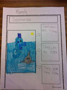 Ocean animals - fact and drawing sheet