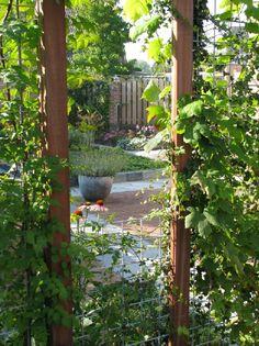 Door een 'groene muur'  word een extra dimensie in de tuin gecreëerd.