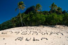 Things to Do in Castaway Island, Fiji: Tourist Attractions & Travel Guide