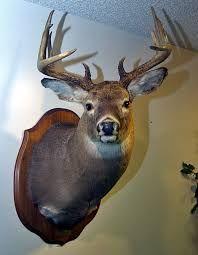 Image result for deer head