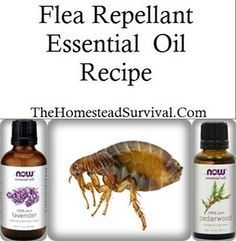 6 – 8 drops Cedarwood essential oil 2 – 4 drops Lavender essential oil 1/4 cup water Mix ingredients in a small glass bowl. Submerge soft cloth or nylon collar in the mixture. Let collar absorb mixture for five minutes. Hang collar to dry completely before putting the collar back on your dog/cat.
