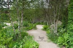 Gravel path through birch Betula glade underplanted with ferns and naturalistic planting of meadow flowers boulder Design