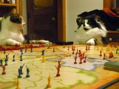 Game cats