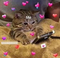 Memes Heart Cartoon Ideas For 2019 Cute Baby Cats, Cute Funny Animals, Kittens Cutest, Funny Cute, Cute Cat Memes, Cute Love Memes, Funny Memes, Funny Dogs, Memes Amor