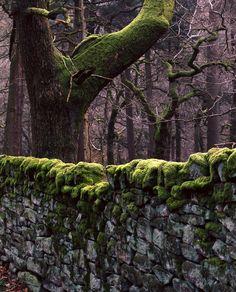 mossy wall.