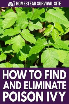 The following is a short masterclass on how to find and eliminate poison ivy once and for all. You need the right gear, and you need to be very careful.