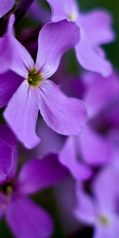 Purple Pins For Pinterest @ http://baenk.com/purple - purple❤️