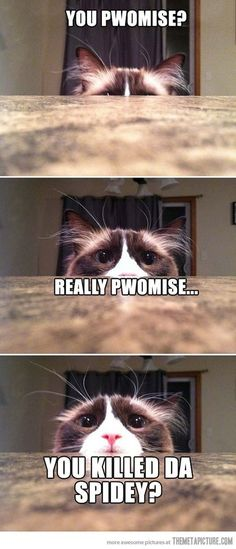 I personally love memes and funny cat memes are my personal favorite. Who could resist adorable images of cats, dogs, and other animals next to a funny tagline? Cat Memes To Make You Laugh Until You Cry! Funny Animal Memes, Cute Funny Animals, Cute Baby Animals, Funny Dogs, Funny Memes, Funny Quotes, Humor Quotes, Pet Quotes, Mom Funny