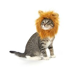 Lion Cat Costume – Meowingtons Tom, my cat needs this to ward off The Boogie Cat who comes to beat him up.