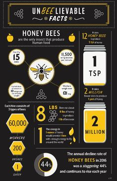 Honey Bee Facts, Bee Hive Plans, Bee Hummingbird, Beekeeping For Beginners, Raising Bees, Buzzy Bee, Jeremy Clarkson, Bee Farm, Birds And The Bees