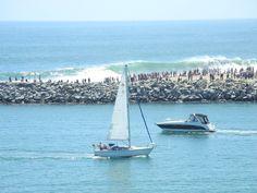 the wedge, newport beach ca