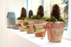pines, holiday, craft, tree, christmas centerpieces, decorating ideas, kitchen windows, decorations, clay pots