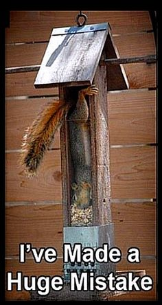 Squirrel caught in the bird feeder...Just love this picture...LOL... Animal Humor