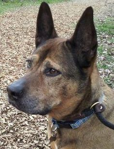 Meet Alexis, or Alex for short! This 9 year old shepherd mix is sweet and playful and likes to be with her people. Learn more and watch her video on our website.