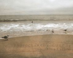 Bird Photography   Seagulls at beach cloudy day by NinaCollosi, $18.50