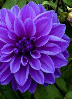 Spring blooms in purple www.merlotskincare.com