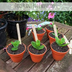 Mini Oreo cheesecake plant pots